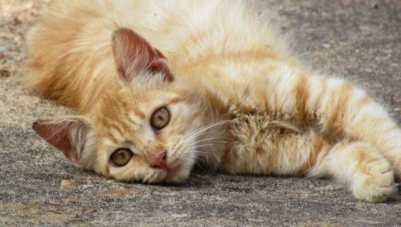 gato maltrato animal e1631113845591 580x329