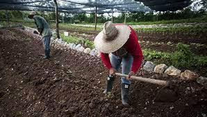 mejoramiento suelos
